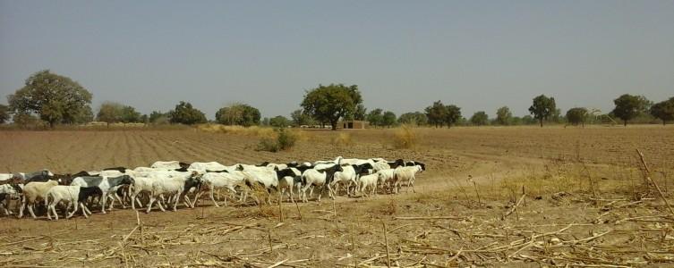 Diagnóstico de crisis para Nordgold – Burkina Faso