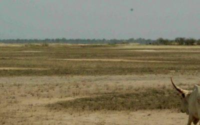 Etude de faisabilité pour l'AFD – Niger