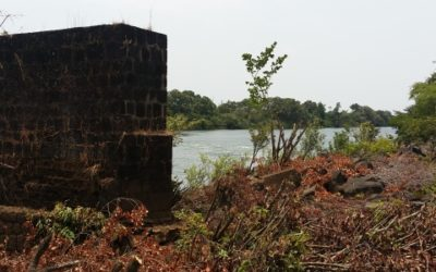 Analyse des données des inventaires pour Alufer – Guinée