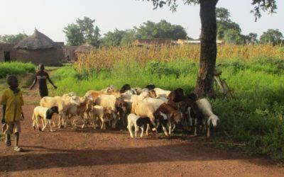 Audit du PAR et de l'EIES du projet BDGO – Burkina Faso