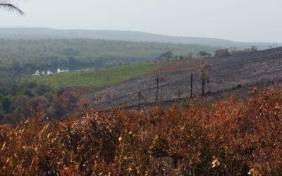 Gap analysis d'une EIES pour Dynamic Mining – Guinée