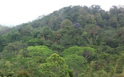 Sauvegardes environnementales et sociales pour la Banque Mondiale – République Centrafricaine
