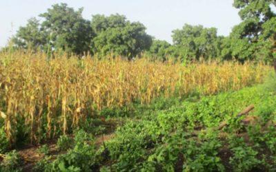 Elaboration d'un Cadre de Gestion Environnemental et Social pour l'AFD – Burkina Faso