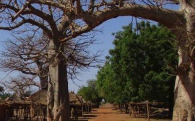 Elaboration d'un Cadre de Gestion Environnemental et Social pour l'AFD – Sénégal