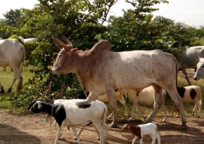Etude juridique pour la création d'un abattoir – Burkina Faso