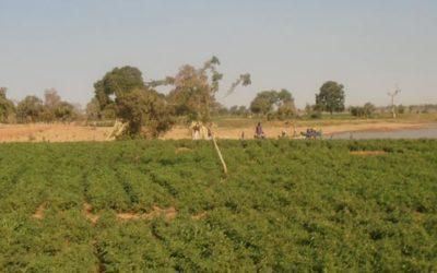 Etudes sociales d'un projet d'irrigation – Niger