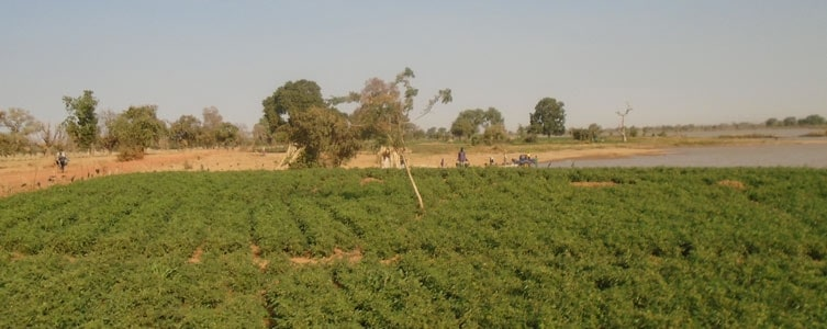 Social studies for an irrigation project – Niger