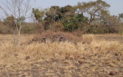 Etude de base sociale pour un projet d'aire protégée – Guinée