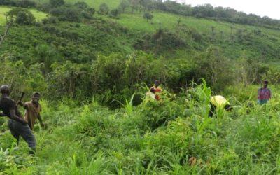 Etude sur le Foncier Rural pour le ministère de l'agriculture – Guinée