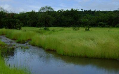 Mise à jour du PAR et de l'EIES du Barrage de Souapiti – Guinée