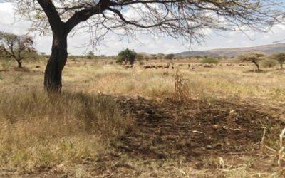 Elaboration du PAR d'un projet de centrale solaire – Kenya