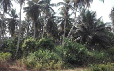 PAR de la ligne électrique du projet Atinkou – Côte d'Ivoire