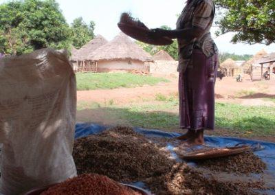 Supply chain study for Copeol – Guinea