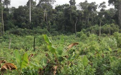 Plan de Gestion Sociale pour Eramet – Gabon