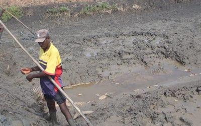 Etudes pour les programmes d'appui à la filière riz, pour l'Iram – Guinée