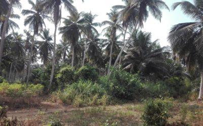 Etude des prix du foncier et inventaire pour le projet Kékéli – Togo