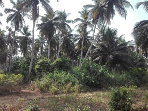 Study of land prices and inventory for the Kékéli project – Togo