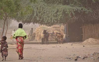 Projet Resilac – Tchad, Cameroun, Niger, Nigeria