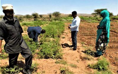 Rapport de cadrage du Projet de gestion durable des terres – Somaliland