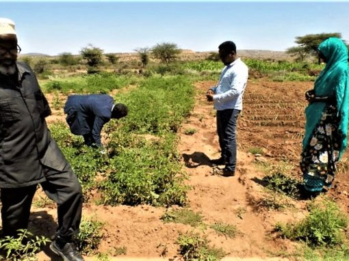 Screening Report of the Scaling Up Sustainable Land Management Project – Somaliland