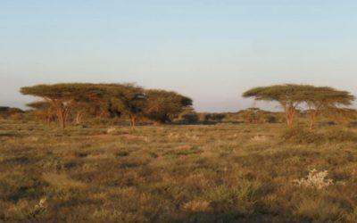 Rapport de cadrage du Projet de renforcement des services de production et de santé animales – Somaliland